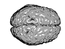 Human brain viewed from above, showing cerebral hemispheres. The front of the brain is to the right.