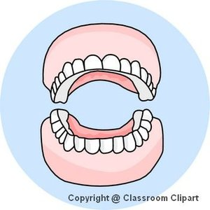 Teeth, Image provided by Classroom Clip Art (http://classroomclipart.com)